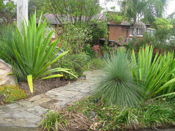native garden shrub