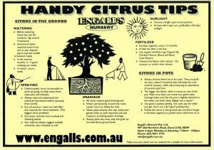 Handy Citrus Tips from our Preferred Citrus Supplier