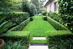 Loving Your Lawn: Care and Maintenance Tips