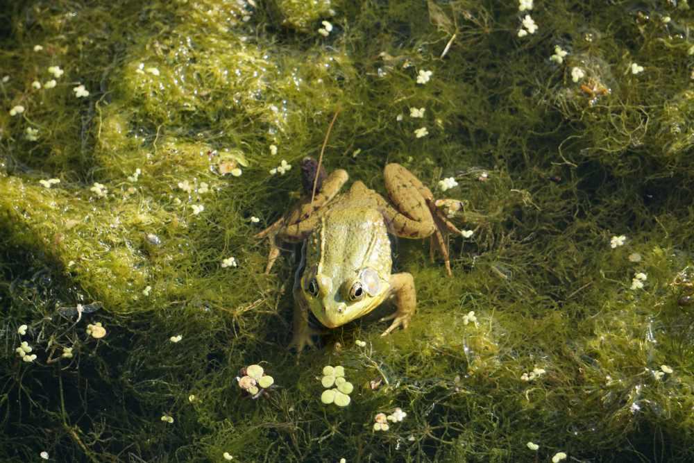 garden frog pond