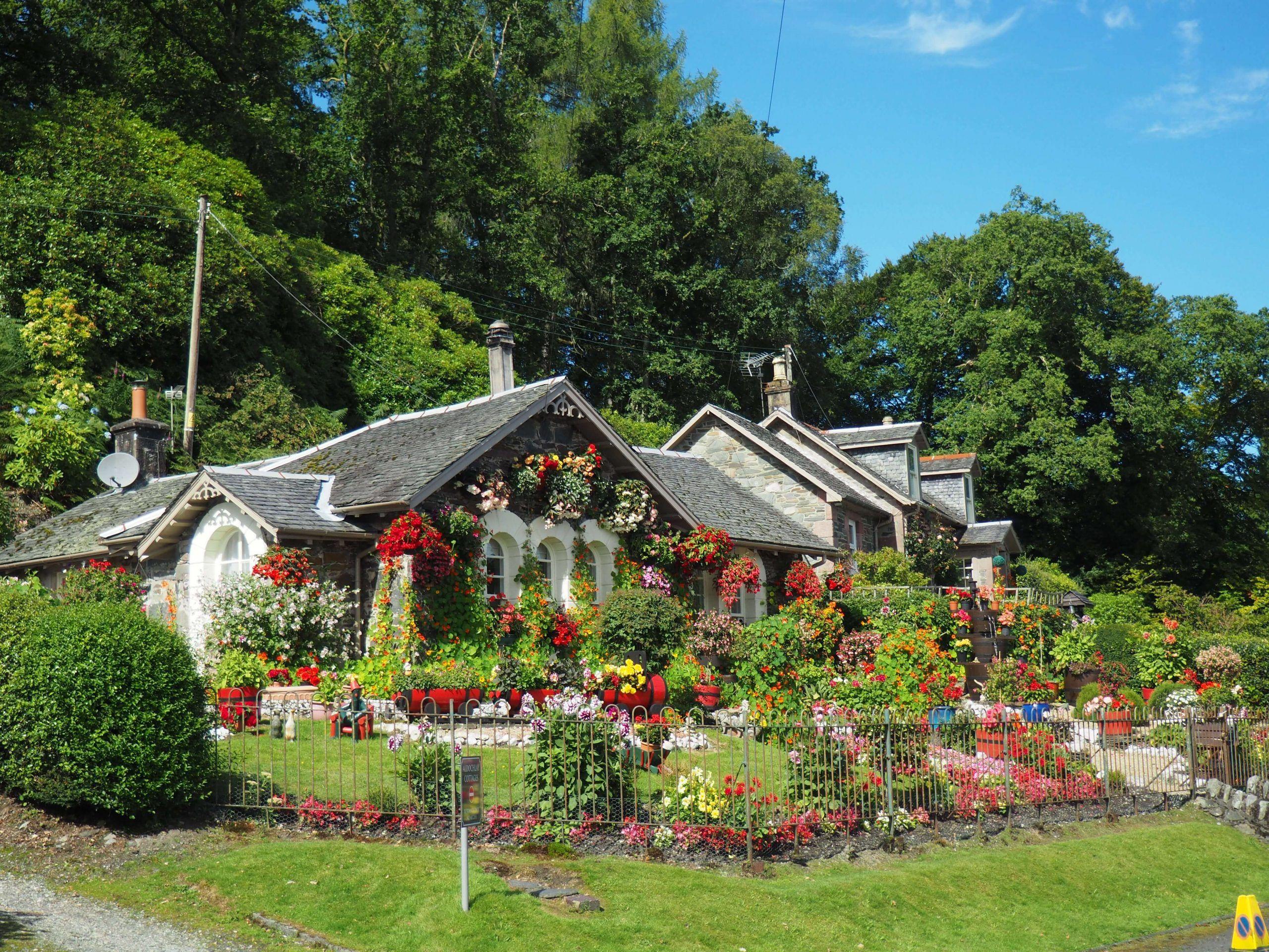 garden shrubs and flowers