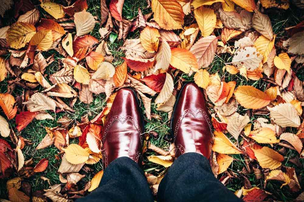 lawn in autumn