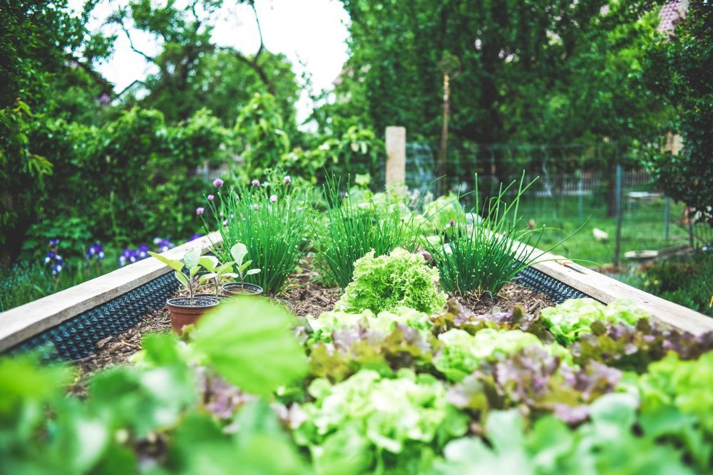 How to Make the Most Out of a Small Garden?